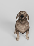 Dachshund dog looking up while sitting top view white floor 3d render