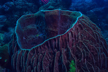 "Постер, картина, фотообои ""coral reef macro / texture, abstract marine ecosystem background on a coral reef"""