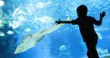 Kid watching the shoal of fish swimming in oceanarium