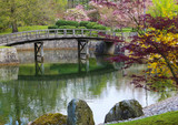 Azalea blossom in Japanese garden  In HASSELT Belgium
