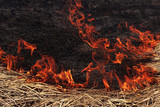 Fire dry grass in the forest. The Burning flares up dangerously.
