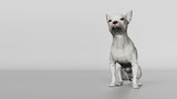 Chihuahua looking up while sitting on gray floor  dog 3d render