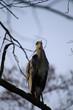Graureiher Vogel