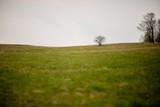 Fototapeta Fototapety na sufit - Samotne drzewo na polanie © Andrew Sk