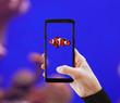 Leinwandbild Motiv Clownfish photographed with mobile phone.