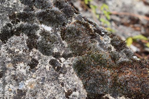 ants on rock - 260585451