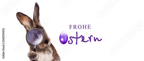 Osterhase - 260594432