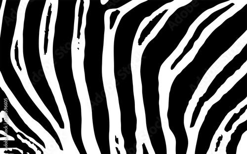 Zebra Animal Print Vektor Grafik - 260596605