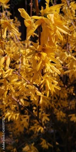 canvas print picture gelbe Blüten