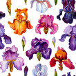 Iris watercolor seamless pattern. Purple flowers and leaves pattern. Pink, orange,yellow and purple isises flowers pattern. - 260607099
