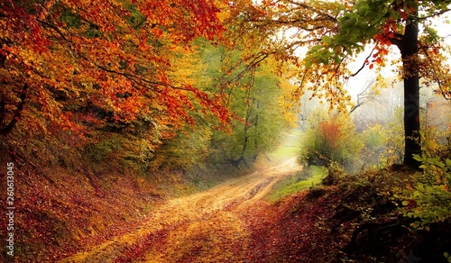 fototapeta na ścianę autumn in the forest