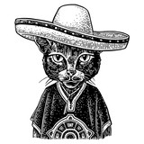 Cat dressed in the poncho, sombrero. Vintage black engraving