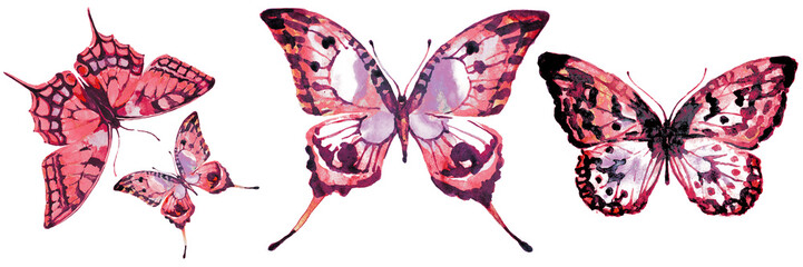 beautiful pink butterfly,watercolor,isolated on a white © aboard