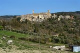scenic view of San casciano dei Bagni medieval town in Tuscany, Italy. Some Chianina cows graze in the foreground
