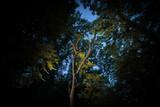 Fototapeta Fototapety na ścianę - Unheimlicher Wald bei Nacht © jakobsmeyer