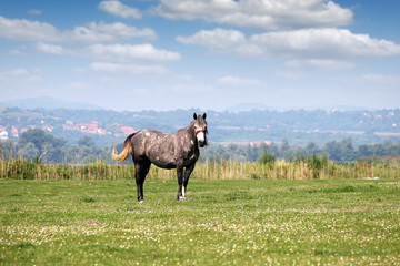 horse in the meadow spring season