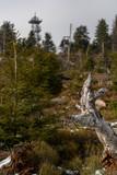 Bäume auf der Hornisgrinde im Schwarzwald