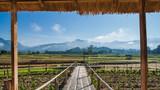 Fototapeta Bambus - Bamboo walk path among red cana flower field © ak