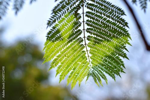green leaf of a tree