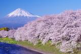 静岡、富士山と桜