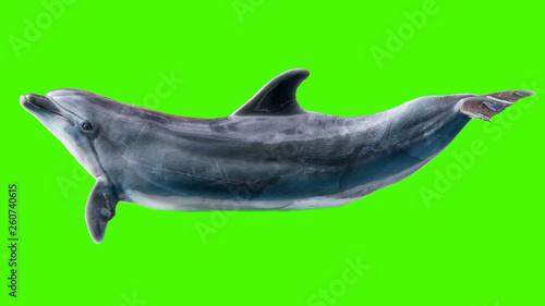 Leinwandbild Motiv Dolphin isolated on green background