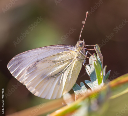 Beautiful butterfly on nature. Macro - 260741018