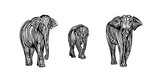 Hand drawn elephant family outline sketch. Vector black ink drawing isolated on white background. Graphic animal illustration