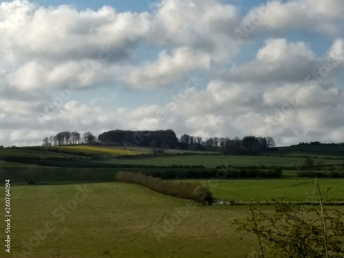 fototapeta na ścianę Landscape view across the green Northumberland hills with hedges and trees and white puffy clouds in blue sky in the English northern countryside in Spring