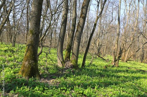 wild flower meadow in forest - 260772047