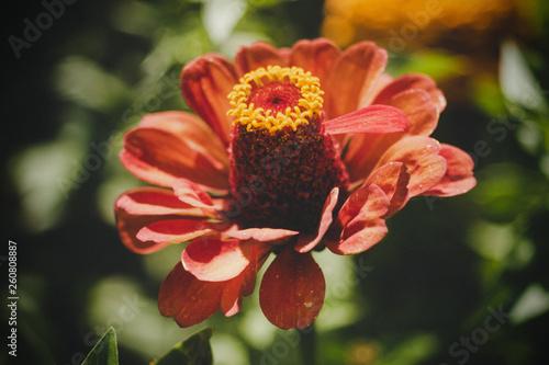 canvas print picture Blume
