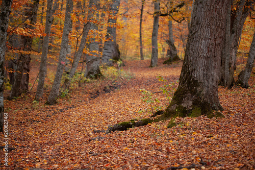 beautiful and color autumn forest