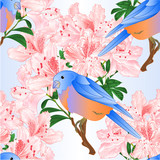 Seamless texture Small  bird Bluebird  thrush and light pink rhododendron branch  vintage vector illustration editable hand draw