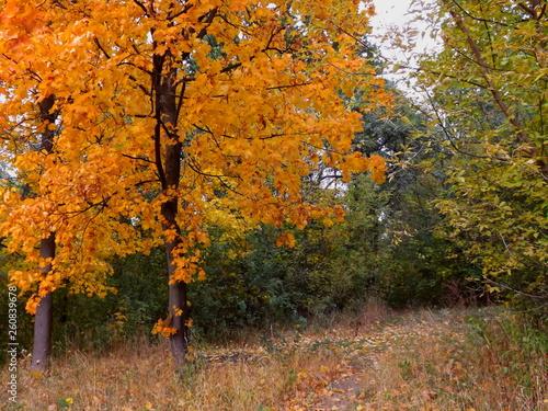 fototapeta na ścianę autumn in the park