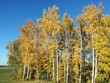 canvas print picture - btBäume mit Herbstlaub
