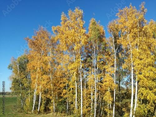 canvas print picture btBäume mit Herbstlaub