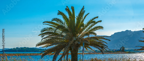 palm with a blue sky in Sardinia, Italy - 260877616