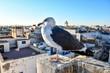 Quadro seagull on the bridge, photo as background