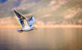 Cute bird flying in the sky over water.