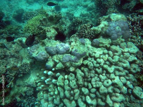 snorkeling Zanzibar, Tanzania, Indian ocean