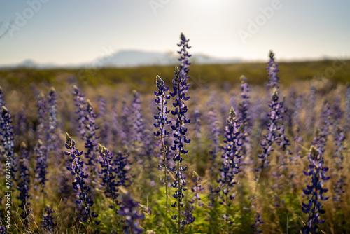 Closeup shot of field of beautiful flowers