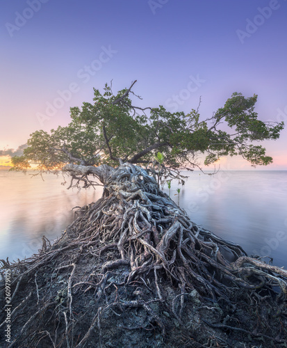 Tree over the water and coast of Borneo beach