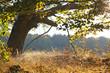 canvas print picture - am Waldrand im Herbst