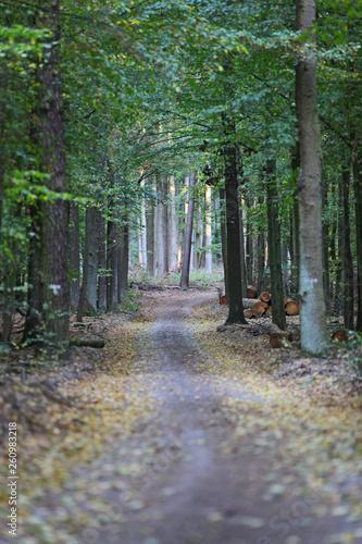 canvas print picture Waldweg