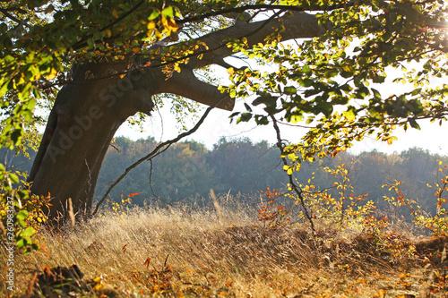 canvas print picture am Waldrand im Herbst
