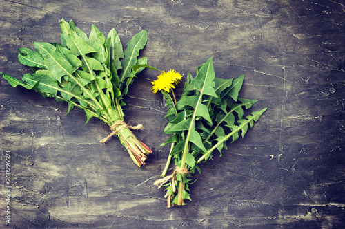 Dandelion Taraxacum officinale - 260996693