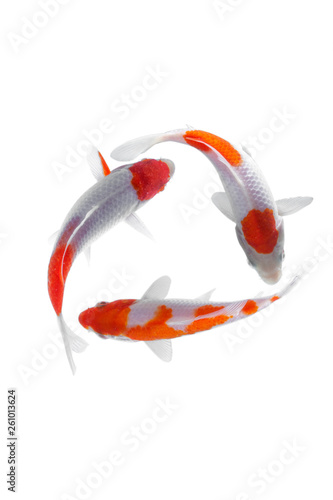 Koi fish kohaku White background © gunungkawi