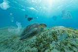 Fototapeta Coffie - Underwater global problem with plastic rubbish © Jag_cz