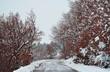 Quadro neve in strada