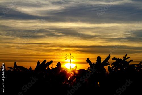 fototapeta na ścianę sunset in the park