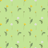 seamless pattern with flowers dandelion